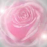 cropped-pinkroses3.jpg