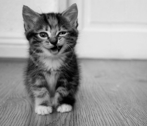 baby-cat-cute-kitten-kitty-Favim.com-72318