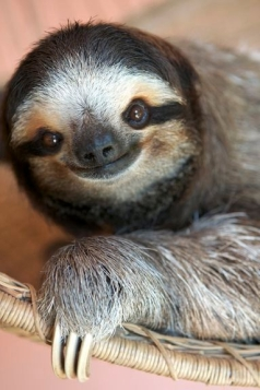 sloth happy